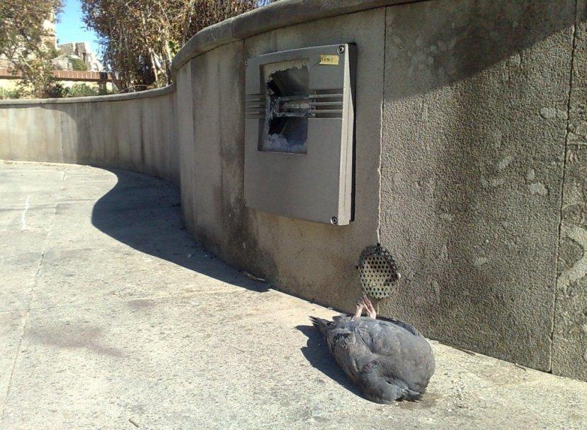 Narni citt in ostaggio dei piccioni for Trappola piccioni